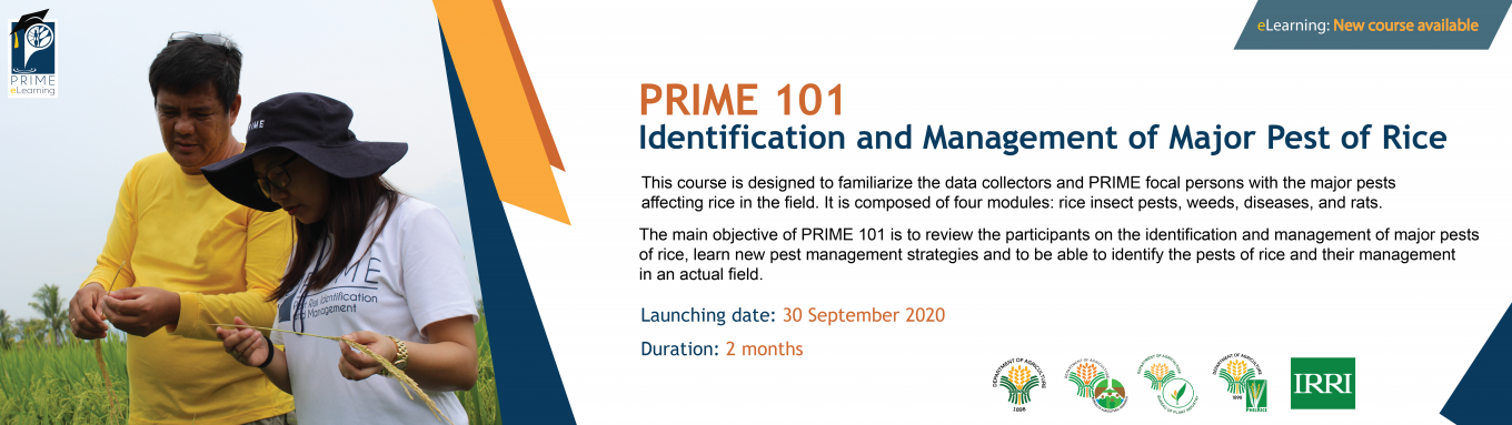 PRIME 101: Identification and Management of Major Pests of Rice